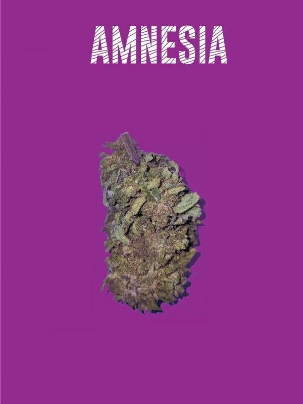 Hempgalore's Amnesia CBD flowers