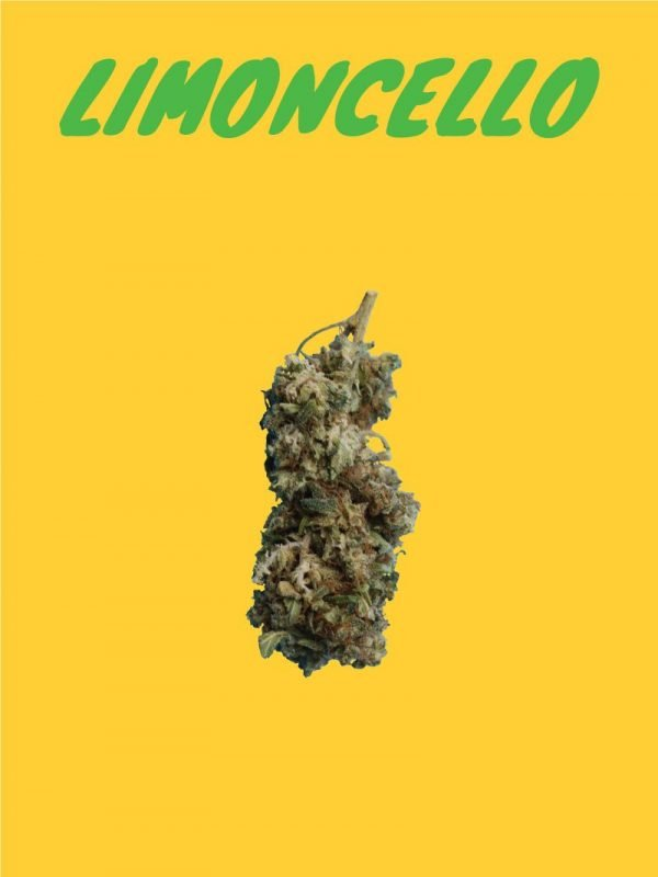 Hempgalore's Limoncello Cannabidiol flowers